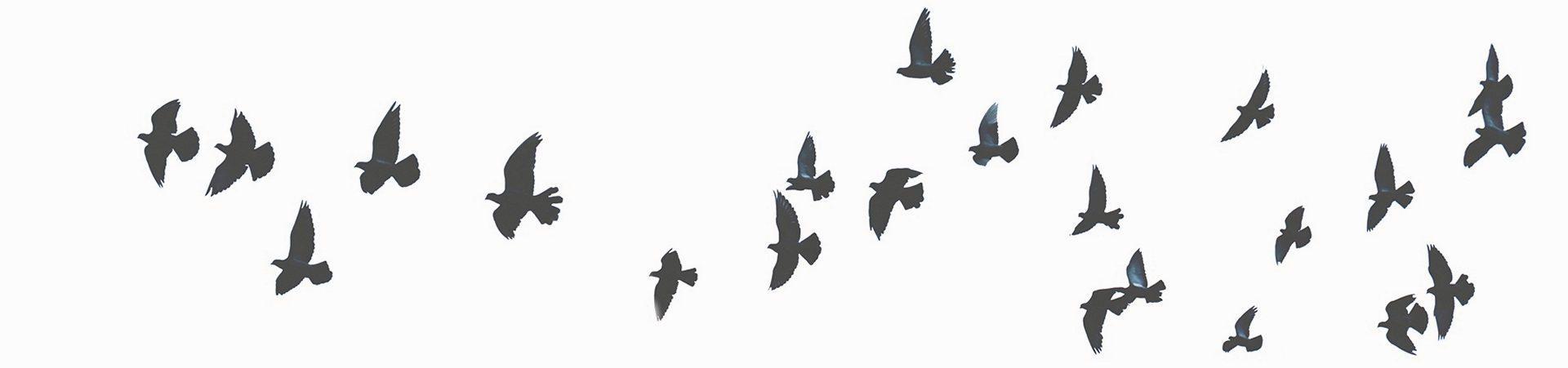 imagen-pajaros-volando